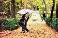 Lluvia de hojas (9345602830).jpg