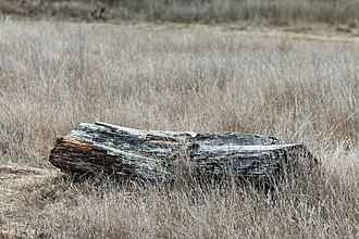 Calera Creek - Image: Log, Calera Creek Wetlands, Pacifica (15968459896)