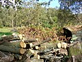 Logpile near Eastshaw Farm - geograph.org.uk - 264170.jpg