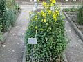 Lorto-botanico-di-padova-2016 27757185784 o 10.jpg