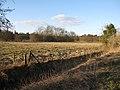 Lynford Arboretum paddock - geograph.org.uk - 1741597.jpg