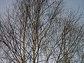 Lyovintsy, Kirovskaya oblast', Russia, 612079 - panoramio (38).jpg