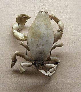 Raninoida superfamily of crustaceans