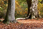 Münster, Park Sentmaring, Naturdenkmal -- 2017 -- 3261.jpg