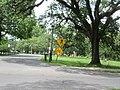 Magazine Street through Audubon Park, New Orleans, 29 June 2020 07.jpg