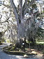 Magnolia Plantation and Gardens - Charleston, South Carolina (8555505881).jpg