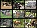 Mamiferos Zoologico de Caricuao Caracas - Venezuela.jpg