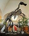 Mandschurosaurus Amurensis..2H1A0331WI.jpg