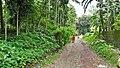 Manosapota Village Road - Simurali - Nadia 20170730121547.jpg