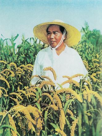 Hou Bo - Image: Mao Zedong rice field