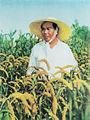Mao Zedong rice field.jpg