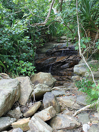 Iriomote cat - Maaree Waterfall, where a group of children found an Iriomote cat on May 5, 1965