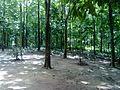 Marebilli forest.jpg