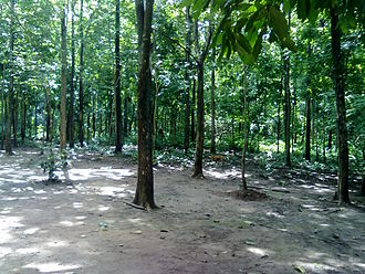 Afforestation - Afforestation in South India
