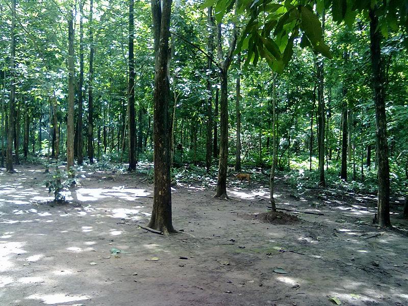 File:Marebilli forest.jpg