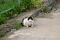 Masatsu - Today's Cat@20070402 (by-sa).jpg
