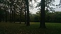 Medusa S Arbor In Fall 2 (230011689).jpeg