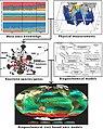 Meta-omics data based biogeochemical modeling.jpg