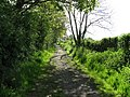 Metalled bridleway approaching Barns Green - geograph.org.uk - 1282649.jpg