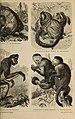 Meyers Konversations-Lexikon - eine Encyklopädie des allgemeinen Wissens (1890) (14592299710).jpg