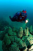 Microbialite Three Poles Diver 50 - 60 feet.