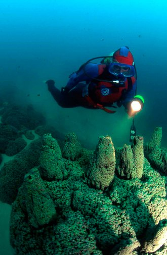 Pavilion Lake - Microbialite  towers with NASA diver, 50 - 60 feet deep in Pavilion Lake.