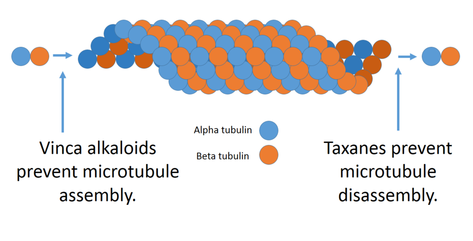 Microtubules and alkaloids