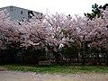 Mikuriya 6675.jpg