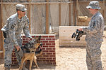 Military Working Dogs training in Baghdad, Iraq DVIDS173844.jpg