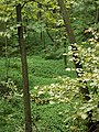 Monarch Woods.jpg
