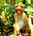 Monkey IMG.JPG