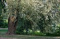 Monthou-sur-Cher (Loir-et-Cher) (28535653984).jpg