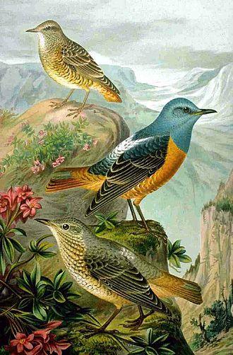 Catalogue d'oiseaux - 150px