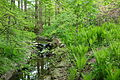 Morris Arboretum - DSC00300.JPG