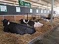 Moxey Farms.jpg