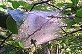 Muldalslia naturreservat 6.jpg