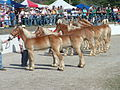 Mule Day in Columbia, TN.jpg