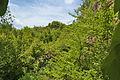 Národní přírodní památka Růžičkův lom, Čelechovice na Hané, okres Prostějov (08).jpg