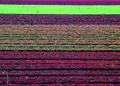 NRCSAZ02048 - Arizona (379)(NRCS Photo Gallery).tif