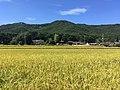 Namsan and paddy fields in Gyeongju.jpg