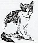 Nansen (cat).jpg