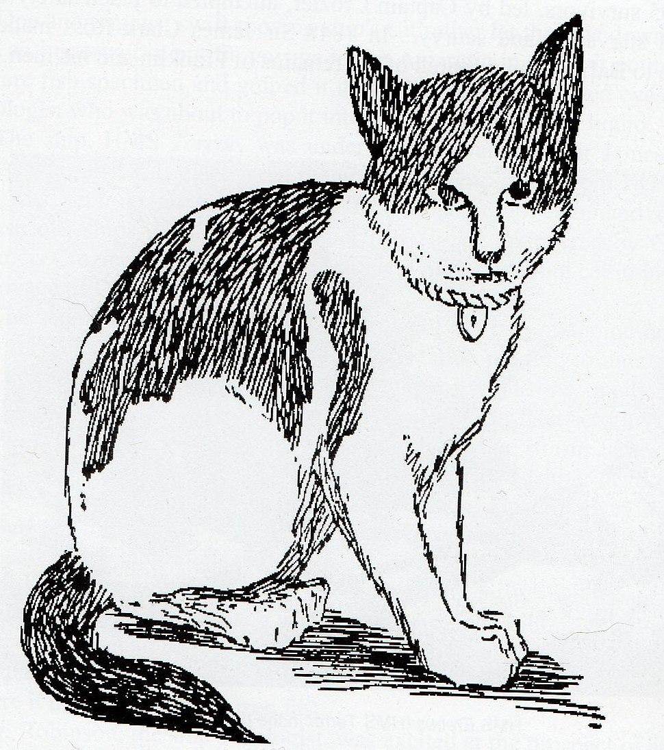 Nansen (cat)