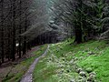 Nant Gwernog Plantation, Cwm Doethie, Ceredigion - geograph.org.uk - 1219011.jpg