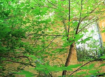 Napuštena zgrada - Dvorska bašta.jpg