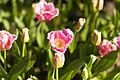 National Botanic Gardens, Dublin (6872705430).jpg