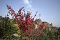National Botanical Garden of Georgia باغ های بوتانیکال در شهر تفلیس گرجستان 29.jpg