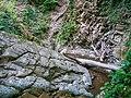 Nature, Oguz ( 1090529).jpg
