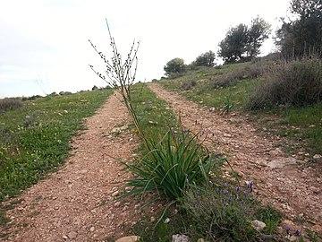 Nature des Monts Beni Chougranes Mohammadia 33.jpg