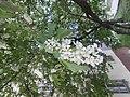 Nature in Smolensk - 54.jpg