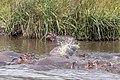Nature of Ngorongoro Conservation Area (142).jpg